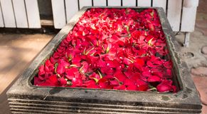 Carpet of red petals growing Royalty Free Stock Photos