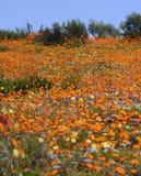 Carpet of spring flowers Stock Image