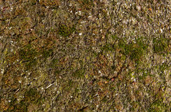 Carpet sprouting moss Stock Photo