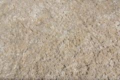 Carpet texture. Hairy beige carpet texture - closeup Royalty Free Stock Image