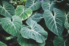Carpet of tropical plants green tone , summer spring background, stylishly tinted pattern of jungle. Leaves stock photo