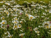 Carpet of wildflowers in spring - 2 Stock Photos