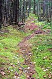 Carpeted供徒步旅行的小道 库存照片