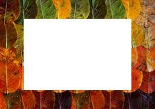 Carpeted рамка коричневый осени желтый и оранжевый лежать листьев Белый прямоугольник в середине закрепляя маск r стоковые фото