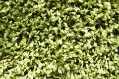 Carpeting woolen hinge green tint.  stock photography