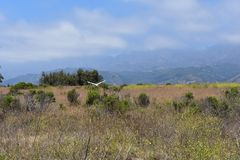 The Carpinteria Bluffs nature preserve, 2. Purchased to protect the land from development, not only is the area home to many local plant and animals, but royalty free stock photos