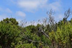 Carpinteria Bluffuje natury prezerwę, 1 fotografia royalty free