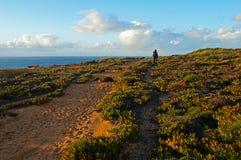 Carpoprotus edulis Дикие зеленые succulents на побережье стоковое изображение rf