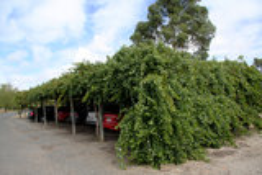 A carport made of grapevines Stock Photos