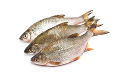 Carps Royalty Free Stock Images