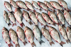 Carps. On fish market Royalty Free Stock Photography