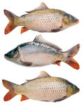 Carps collection Stock Images