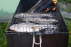 Carps grill. Carps roasted on the grill Stock Images