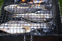 Carps grill. Carps roasted on the grill Royalty Free Stock Images