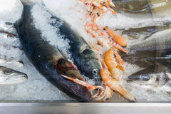 Carps and lobsters on ice in fish market. Frozen fish and seafood on ice in fish market Stock Photos