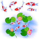 Carps and lotus in pond. Japanese or Chinese themes. Carps Koi swim in clear pond with water rose lotus and leaves. Set of five fishes. Up view. Vector color Stock Photo