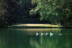 Carps pond in the garden of Fontainebleau castle Stock Image