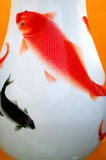 Carps on porcelain vase Stock Images