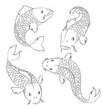 Carps sketches Stock Photography
