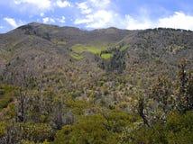Carr Peak en el bosque del Estado de Coronado de Arizona meridional fotos de archivo libres de regalías