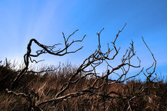 Carragh twigs 1. Barren twigs on the shore of lake carragh in county kerry ireland stock photo
