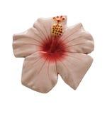 Carreaux de céramique de fleur Images stock