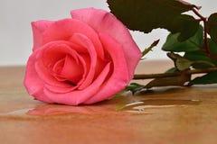 Carreaux de céramique de Rose L'eau coulée hors d'un vase Images stock