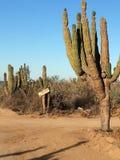Carrefours au Mexique Photos stock