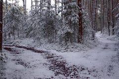 Carrefours, pins, piceas - horaire d'hiver images libres de droits