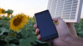 Carregando no close-up de mobil no luminoso, as mãos mantêm o painel solar no céu azul e nos girassóis do fundo, celulares video estoque