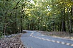 Carreggiata pavimentata allineata con le foglie ed i cavi falled attraverso gli alberi verdi fertili fotografie stock