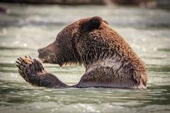 Carregue pescar no rio de Chilkoot perto de Haines foto de stock royalty free