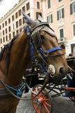 Carrelli del cavallo fotografia stock