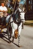 Carrelli turistici del cavallo e costruzione centrale a Plaza de Espana Siviglia, Spagna immagine stock
