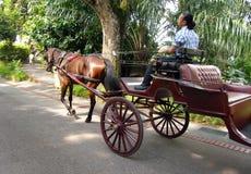 Carrello aperto trainato da cavalli, giardino zoologico immagini stock libere da diritti