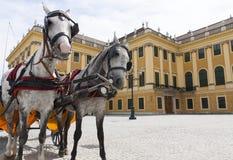 Carrello del cavallo vicino al palazzo di Schonbrunn immagini stock libere da diritti