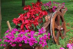 Carrello di legno in pieno dei fiori variopinti Immagine Stock