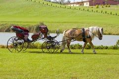 Carrello trainato da cavalli Fotografia Stock
