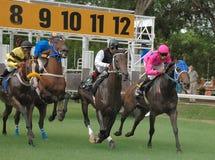 Carrera de caballos Foto de archivo libre de regalías