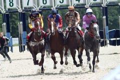Carrera de caballos. Foto de archivo libre de regalías