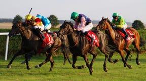 Carrera de caballos 2013a Fotos de archivo libres de regalías