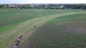 Carrera de caballos, cantidad de la antena del abejón metrajes