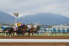 Carrera de caballos cerca de la meta Foto de archivo libre de regalías