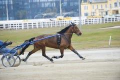 Carrera de caballos de harness Imágenes de archivo libres de regalías