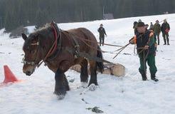 Carrera de caballos de proyecto Imagen de archivo