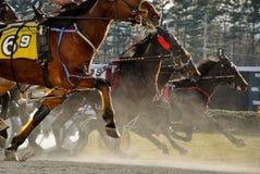 Carrera de caballos de Standardbred Imagen de archivo libre de regalías