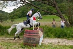Carrera de caballos del campo a través imagen de archivo libre de regalías