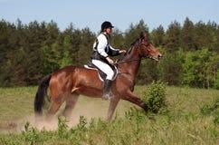 Carrera de caballos del resorte Imágenes de archivo libres de regalías