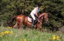 Carrera de caballos del resorte Fotografía de archivo