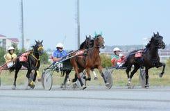 Carrera de caballos el trotar en pista Imágenes de archivo libres de regalías